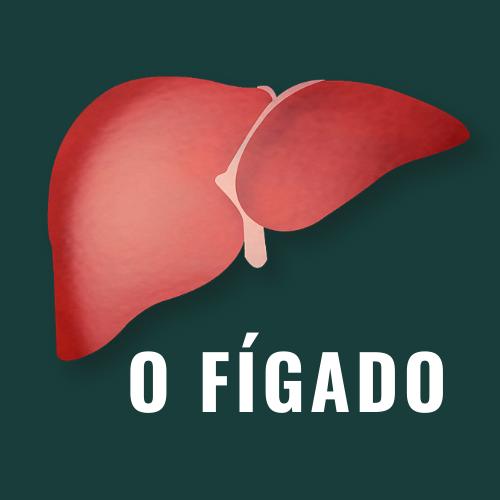 Fígado – Órgão Responsável pelo Detox do Corpo